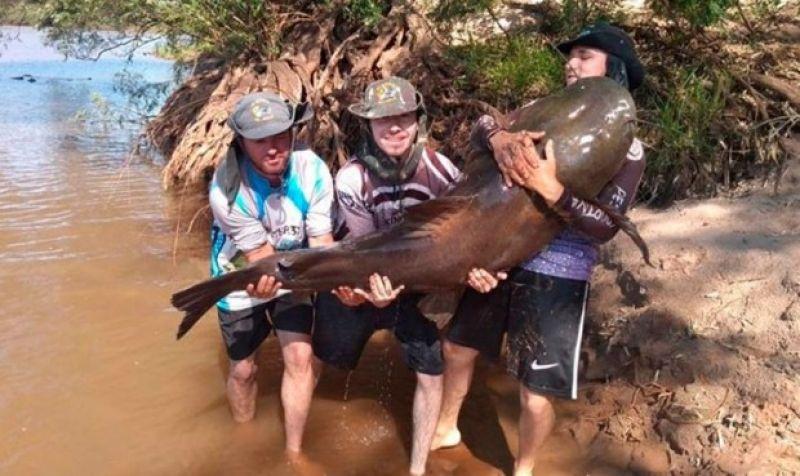 Pescador pega Jaú de 83  quilos e após foto, devolve o peixe ao rio (Vídeo)